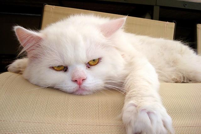 bored-cat.jpg
