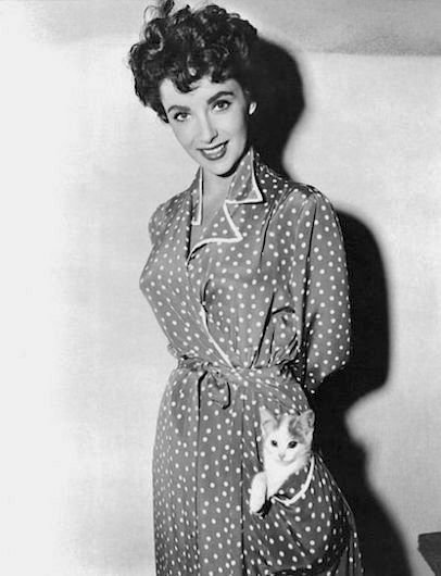 elizabeth taylor cat kitten