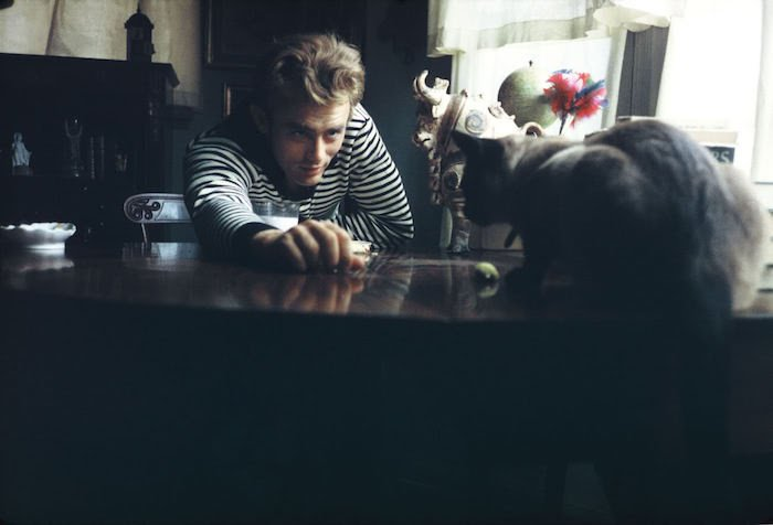 james dean cat famous cats