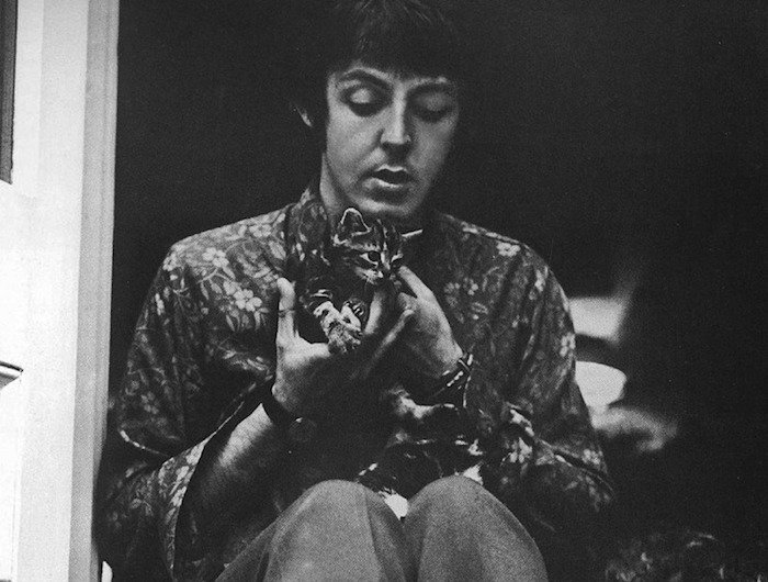 paul mccartney cat