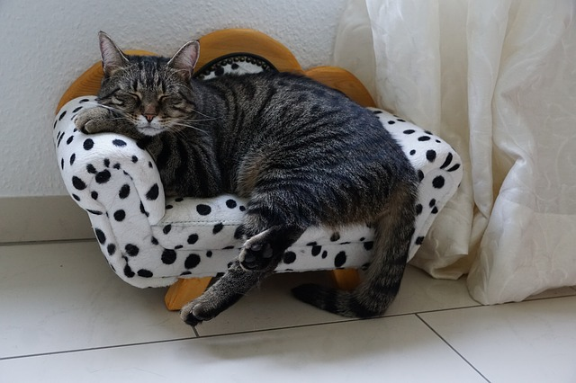 relaxing cat on pillow